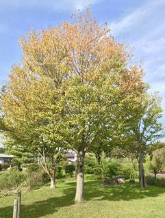 初秋の風景🌿🍁🍂🍃の写真・画像素材[778647]