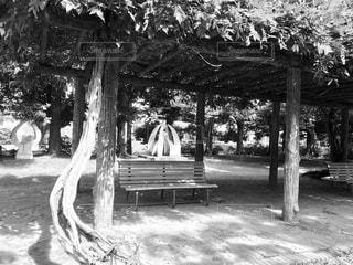 公園のベンチの写真・画像素材[814097]
