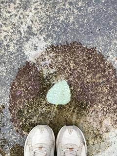 雨の中の落ち葉🌿🍁🍂🍃の写真・画像素材[822805]