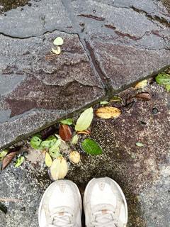 雨の中の落ち葉🌿🍁🍂🍃の写真・画像素材[822806]