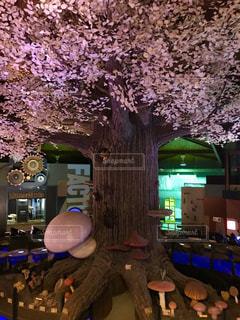 桜をイメージ🌸の写真・画像素材[843387]