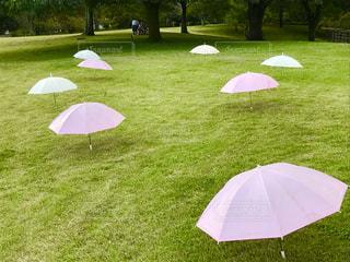 かわいい傘☂の写真・画像素材[843411]