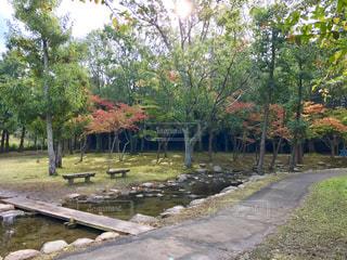 公園を流れる川の写真・画像素材[845758]