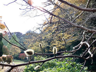 公園の樹木🌲の写真・画像素材[845785]