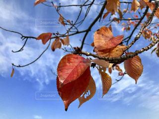 紅葉🌿🍁🍂🍃の写真・画像素材[845799]