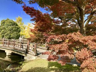 木々 に囲まれた橋🌿🍁🍂🍃の写真・画像素材[846012]