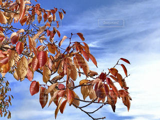 秋の風景🌿🍁🍂🍃の写真・画像素材[846026]