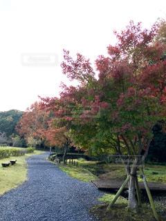 秋の風景🌿🍁🍂🍃の写真・画像素材[846104]