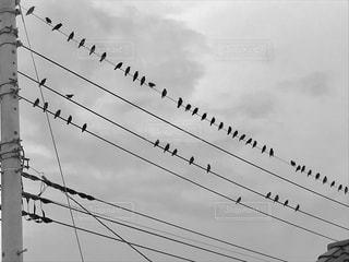ムクドリの群れの写真・画像素材[854111]