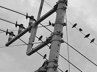 電線に止まるムクドリの写真・画像素材[854125]