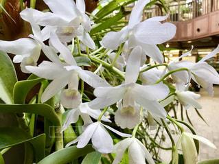白い花 - No.912419