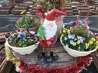 花,植物,クリスマス,サンタクロース,植物園