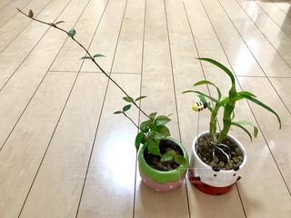 室内に、かわいい植木鉢🍓🐞緑の植物🍃🌱で癒されています😊の写真・画像素材[1016859]