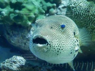 水玉模様の魚🐟の写真・画像素材[1082605]