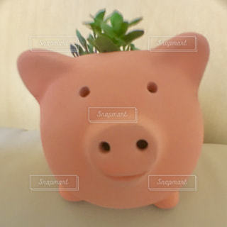 観葉植物とブタさん植木鉢!(b^○○°)の写真・画像素材[1206112]