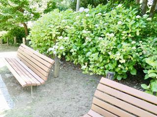 公園に並んだベンチの写真・画像素材[1264772]