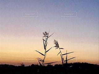 静かな夕暮れの写真・画像素材[1269292]