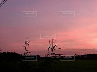 田舎の夕暮れ😊の写真・画像素材[1299851]