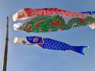 竜神大吊橋の鯉のぼり🎏の写真・画像素材[1312888]