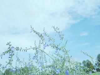 風景,空,公園,花,屋外,植物,雲,水色,秋空,茨城県,フォトジェニック,インスタ映,水戸市