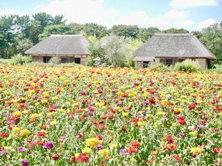 華やかなお花畑🌸🌼の写真・画像素材[1537997]