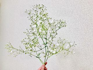 花,かすみ草,植物,白,指,人物,人,ホワイト,可憐