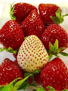 赤いいちごの中に白いいちご💕の写真・画像素材[1765268]