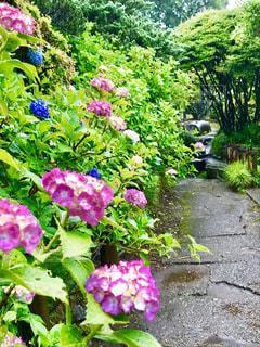 雨の日の公園☔少し先は水溜りですの写真・画像素材[2218129]