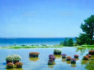 カフェの中から見た風景✨カフェテラスに水があり、そっと浮かべた花たち🌸と、青い空💭と青い海🌊の写真・画像素材[2351098]