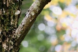樹木と玉ボケの写真・画像素材[2782598]