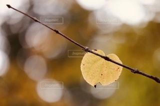 木の枝に残る一枚の葉の写真・画像素材[2782602]
