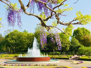 色とりどりの花が咲く植物園🌸の写真・画像素材[4376806]