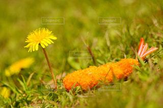 草の中の黄色い花の写真・画像素材[1123545]
