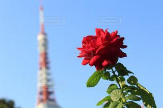 近くの花のアップ - No.797791