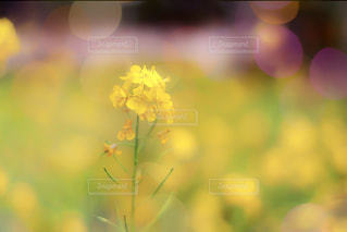 近くの花のアップの写真・画像素材[1370210]