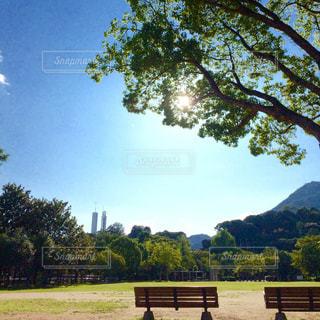 公園のベンチのビューの写真・画像素材[712807]