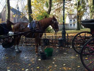 近くに馬の馬車の写真・画像素材[754122]