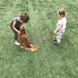 ボールで遊ぶ小さな犬の写真・画像素材[816061]
