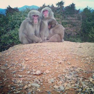 岩が多い区域で猿の写真・画像素材[858009]