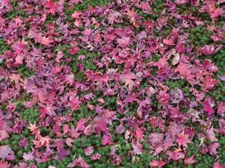 緑の葉とピンクの花 - No.869101