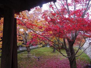 京都,観光,東福寺