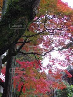 近くの木のアップの写真・画像素材[910432]
