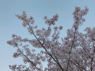 近くの木のアップ - No.1101800