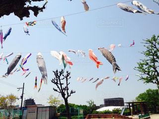 空を飛んでいる鳥の群れの写真・画像素材[1159311]