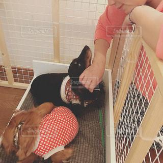 犬,部屋,室内,ペット,のんびり,くつろぎ