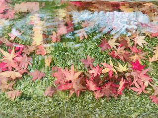 ピンクの花のグループの写真・画像素材[1672271]