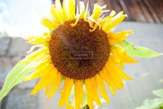 夏,ひまわり,黄色,イエロー,summer,色,yellow