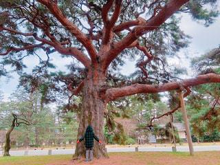 家族,空,公園,木,京都,青空,散歩,子供,女の子,少女,楽しい,人物,人,笑顔,日本