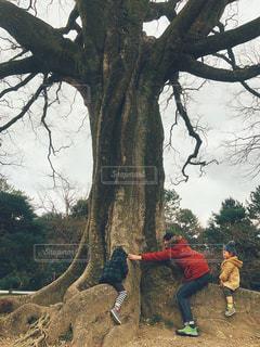 木の隣に立っている男の写真・画像素材[2369438]