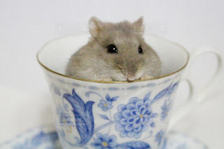 コーヒー カップの横に座っている猫の写真・画像素材[985556]